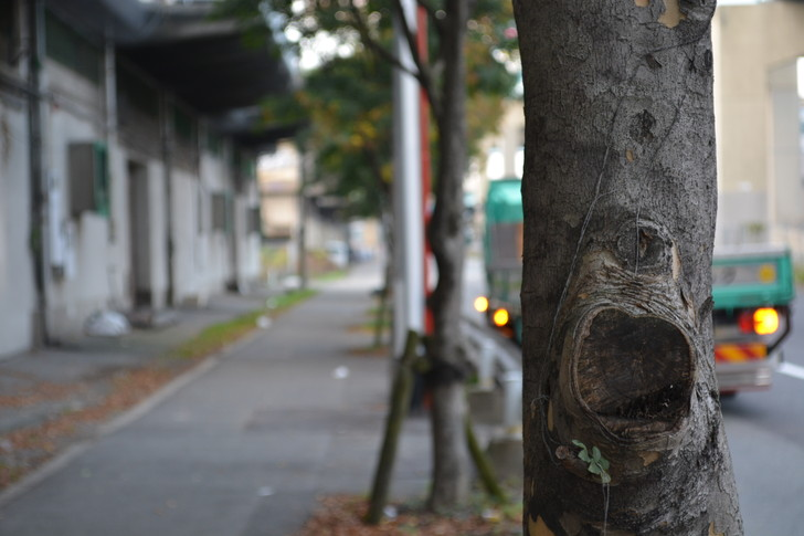 福岡散歩日誌:福岡倉庫横の道2