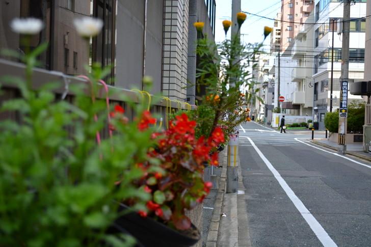 福岡散歩日誌:花と街