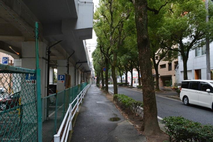 福岡散歩日誌:並木道