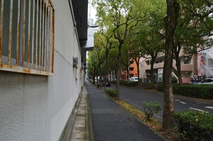 福岡散歩日誌:並木道と鉄格子