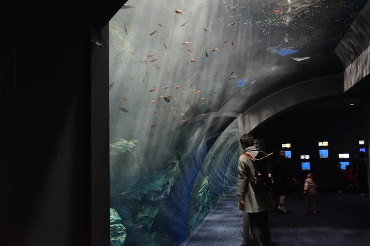 「マリンワールド」と「志賀島」を散歩:こんな感じ