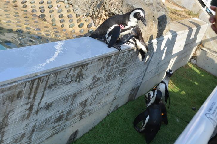 「マリンワールド」と「志賀島」を散歩:たくさんのペンギン