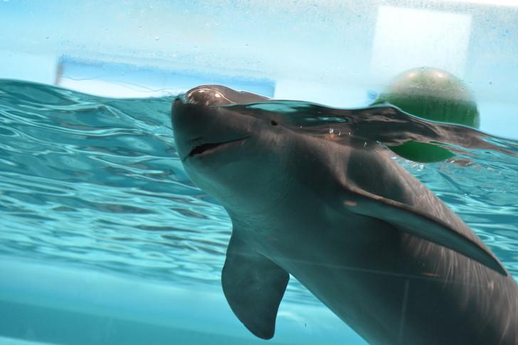 「マリンワールド」と「志賀島」を散歩:イルカ