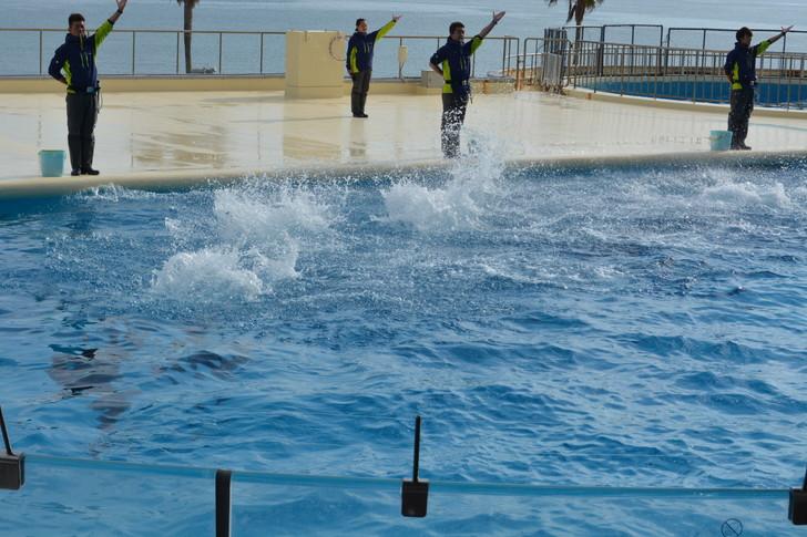 「マリンワールド」と「志賀島」を散歩:イルカが撥ねた後の水しぶき