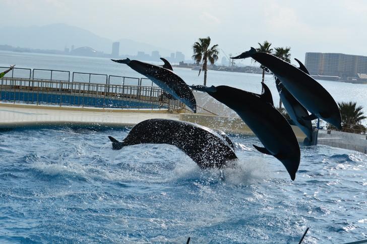 「マリンワールド」と「志賀島」を散歩:飛ぶイルカ