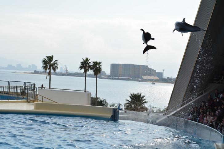 「マリンワールド」と「志賀島」を散歩:めっちゃ高く飛ぶイルカ