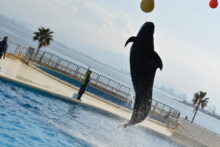 「マリンワールド」と「志賀島」を散歩:クジラも飛ぶ(確かクジラだったはず)
