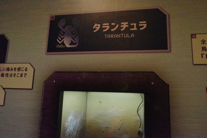 「マリンワールド」と「志賀島」を散歩:タランチュラの表示板