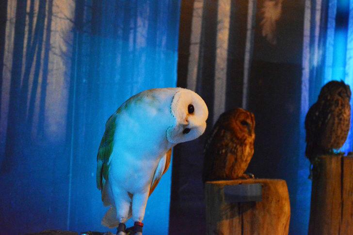 「マリンワールド」と「志賀島」を散歩:フクロウ