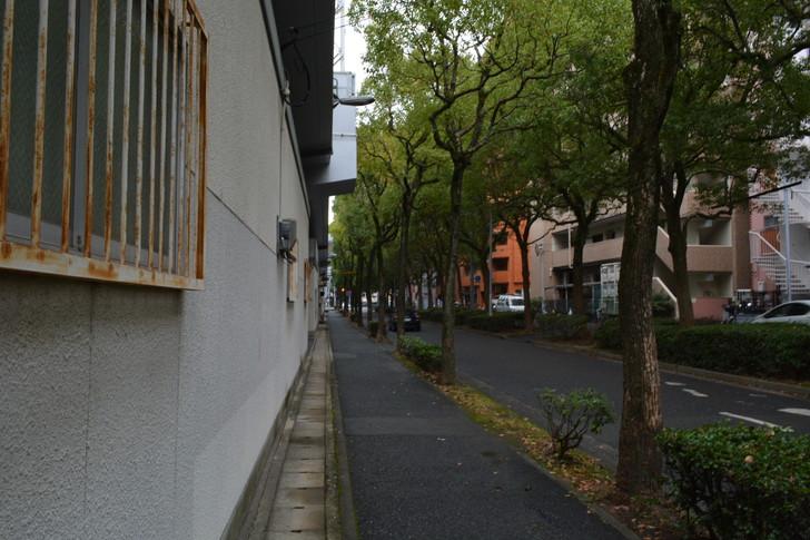 自分なりの散歩の楽しみ方5選:イメージ:「この道に出てくるんだ」という快感を楽しむ