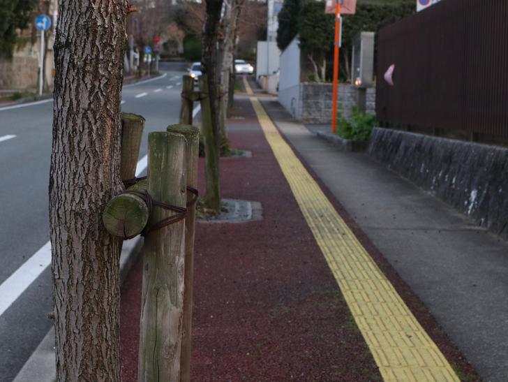 """霊園周りのちょっと不思議な空間「福岡市中央区""""平和""""」を散歩:歩道と木"""