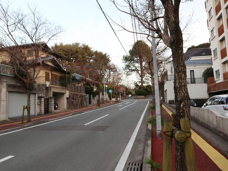 """霊園周りのちょっと不思議な空間「福岡市中央区""""平和""""」を散歩:木と道路"""
