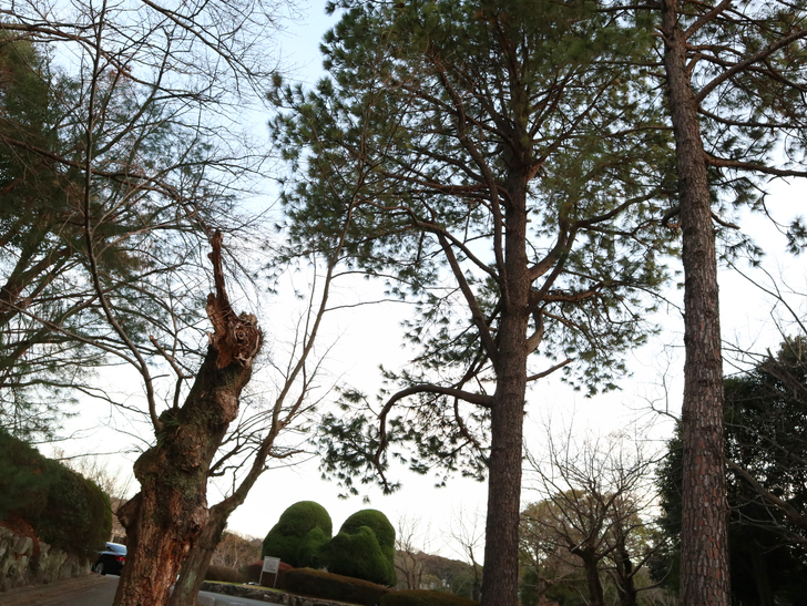 """霊園周りのちょっと不思議な空間「福岡市中央区""""平和""""」を散歩:平尾霊園、入り口の景色"""
