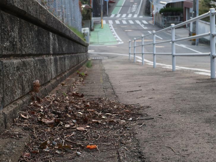 """霊園周りのちょっと不思議な空間「福岡市中央区""""平和""""」を散歩:落ち葉と歩道"""