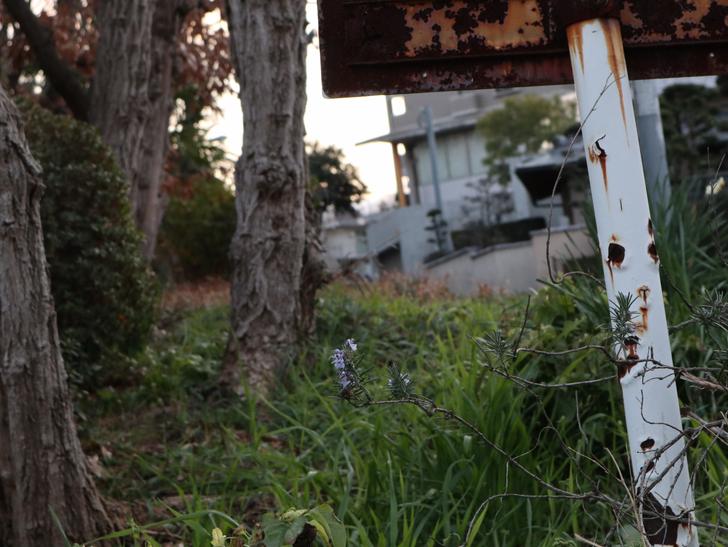 """霊園周りのちょっと不思議な空間「福岡市中央区""""平和""""」を散歩:「錆びた看板」と「植物」の組み合わせが好き"""
