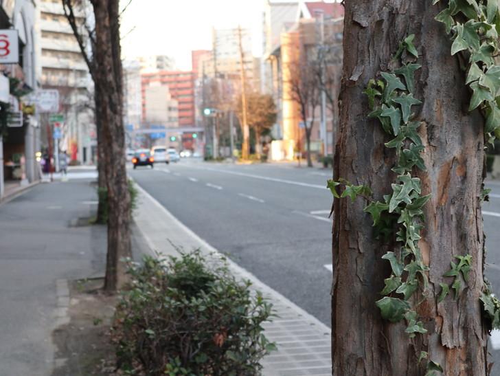 落ち着いた雰囲気の裏道「平尾(山荘通)~薬院大通付近」を散歩:道路と木