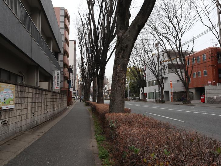 区役所周りの落ち着いた通り「福岡市南区塩原」をゆったり散歩:並木道