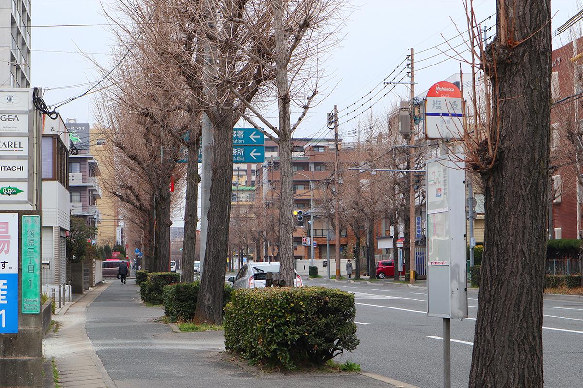 【福岡市南区塩原】区役所周りの落ち着いた通りをゆったり散歩