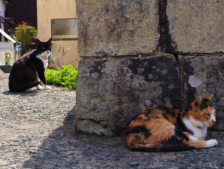 島民328人に対し「猫民100匹」!「相島(あいのしま)」に行ってきた:猫と猫