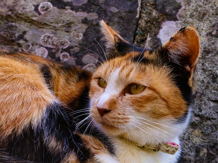 島民328人に対し「猫民100匹」!「相島(あいのしま)」に行ってきた:モッフモフ