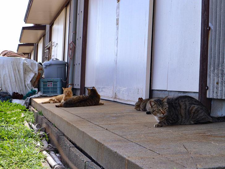 島民328人に対し「猫民100匹」!「相島(あいのしま)」に行ってきた:退屈そうなたくさんの猫
