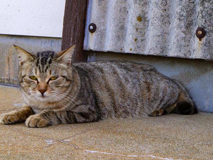 島民328人に対し「猫民100匹」!「相島(あいのしま)」に行ってきた:眠そう