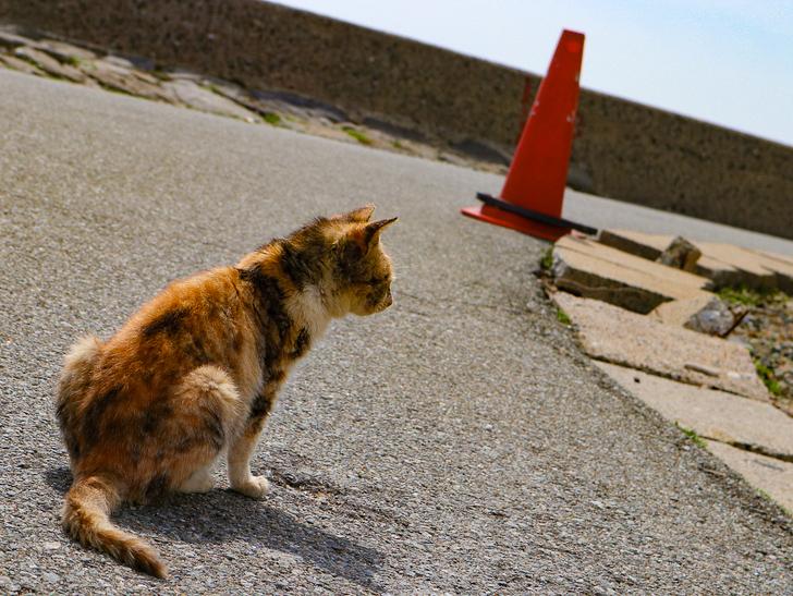 島民328人に対し「猫民100匹」!「相島(あいのしま)」に行ってきた:小ぶりな猫