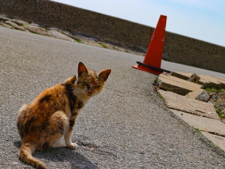 島民328人に対し「猫民100匹」!「相島(あいのしま)」に行ってきた:顔が傷だらけ