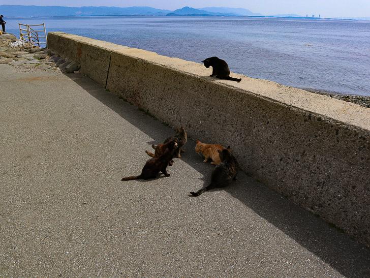 島民328人に対し「猫民100匹」!「相島(あいのしま)」に行ってきた:猫会