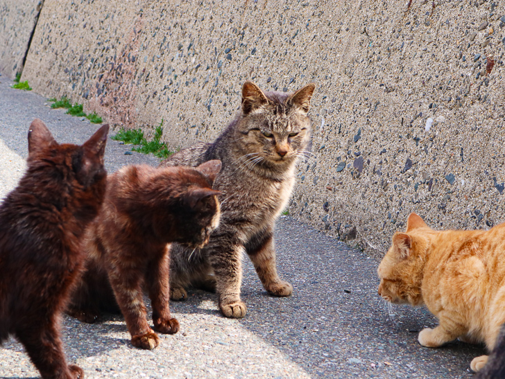 島民328人に対し「猫民100匹」!「相島(あいのしま)」に行ってきた:猫「なんや」