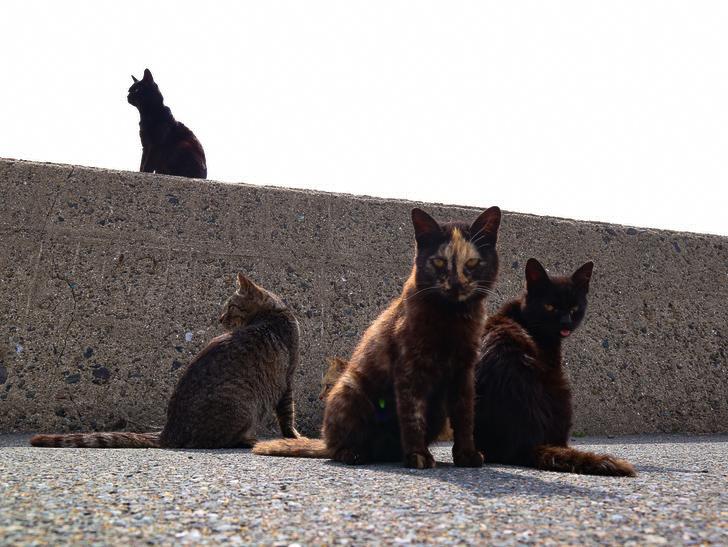 島民328人に対し「猫民100匹」!「相島(あいのしま)」に行ってきた:猫「撮ってる?」