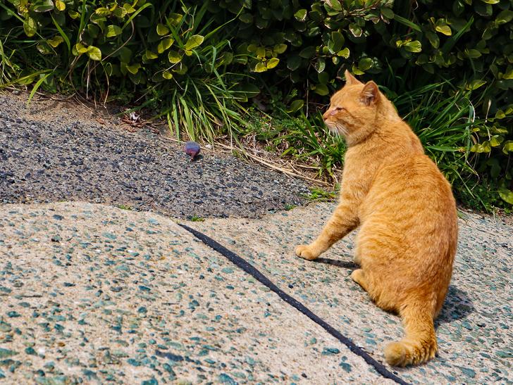 島民328人に対し「猫民100匹」!「相島(あいのしま)」に行ってきた:猫