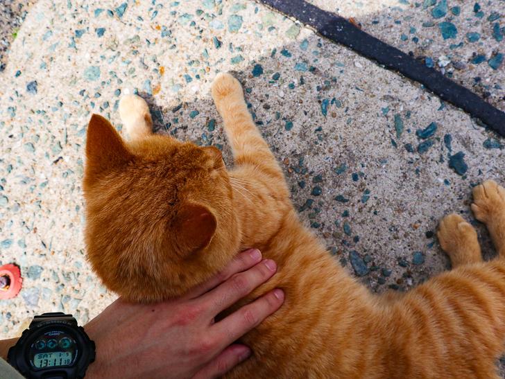 島民328人に対し「猫民100匹」!「相島(あいのしま)」に行ってきた:猫を撫でる