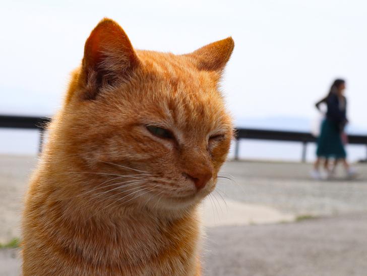 島民328人に対し「猫民100匹」!「相島(あいのしま)」に行ってきた:むっちゃ眠そう