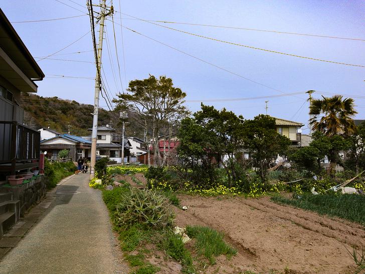 島民328人に対し「猫民100匹」!「相島(あいのしま)」に行ってきた:畑と家