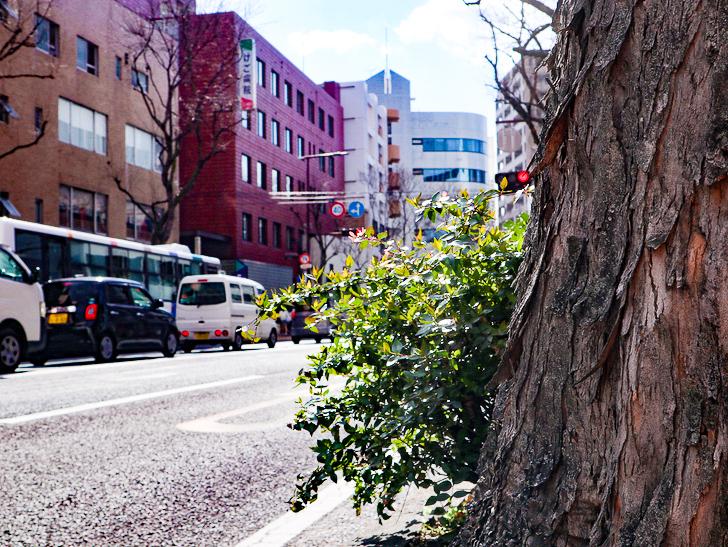 オシャレで趣のある街並み「警固交差点~大濠公園近く」までを散歩:街路樹と国体道路