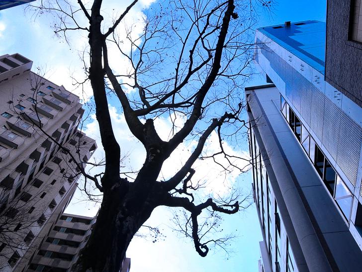 オシャレで趣のある街並み「警固交差点~大濠公園近く」までを散歩:街路樹と青空