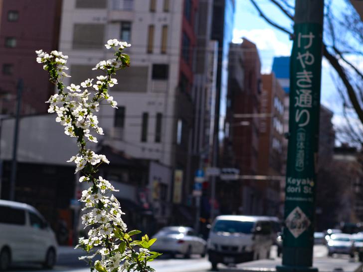 オシャレで趣のある街並み「警固交差点~大濠公園近く」までを散歩:けやき通りと花
