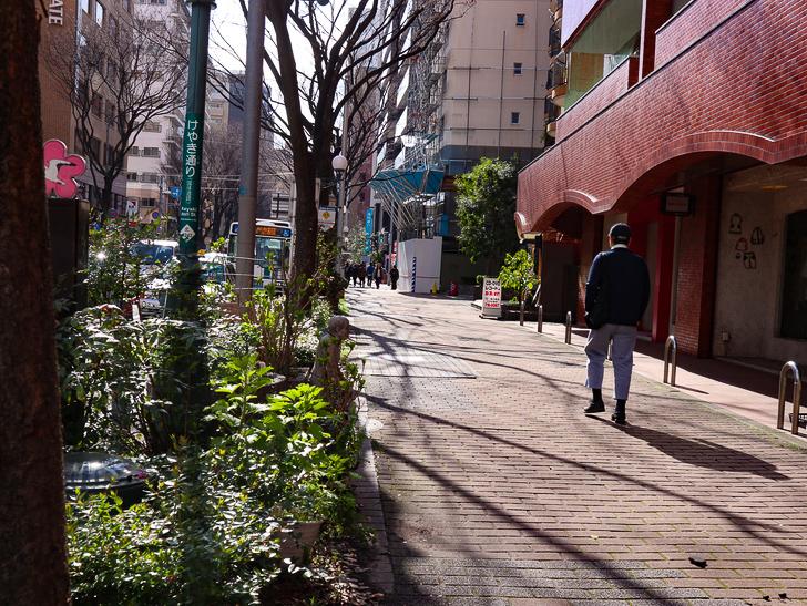 オシャレで趣のある街並み「警固交差点~大濠公園近く」までを散歩:けやき通り沿いの歩道