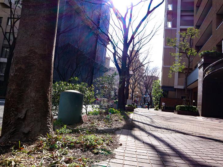 オシャレで趣のある街並み「警固交差点~大濠公園近く」までを散歩:花壇・歩道・街路樹