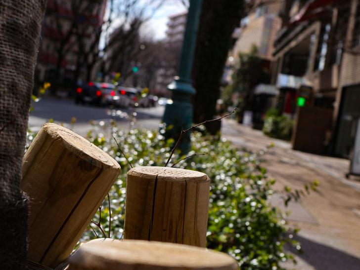 オシャレで趣のある街並み「警固交差点~大濠公園近く」までを散歩:街路樹の支え