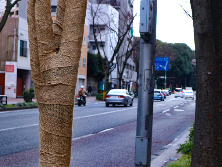 オシャレで趣のある街並み「警固交差点~大濠公園近く」までを散歩:テーピングされた街路樹