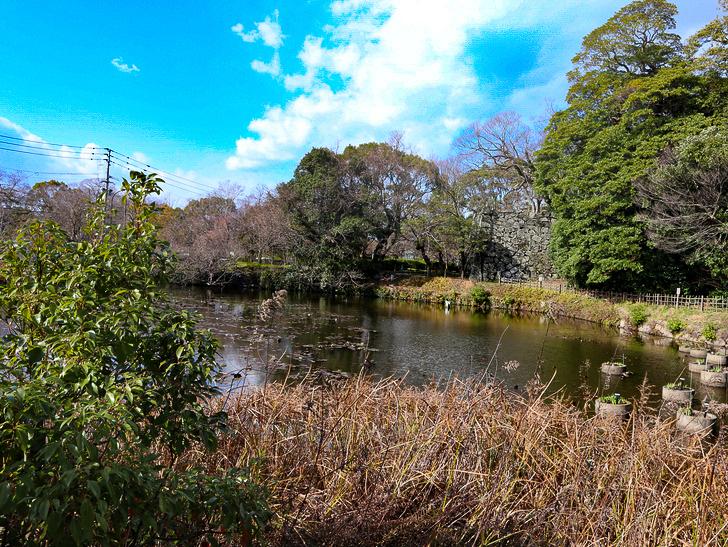 オシャレで趣のある街並み「警固交差点~大濠公園近く」までを散歩:大濠公園近くの池