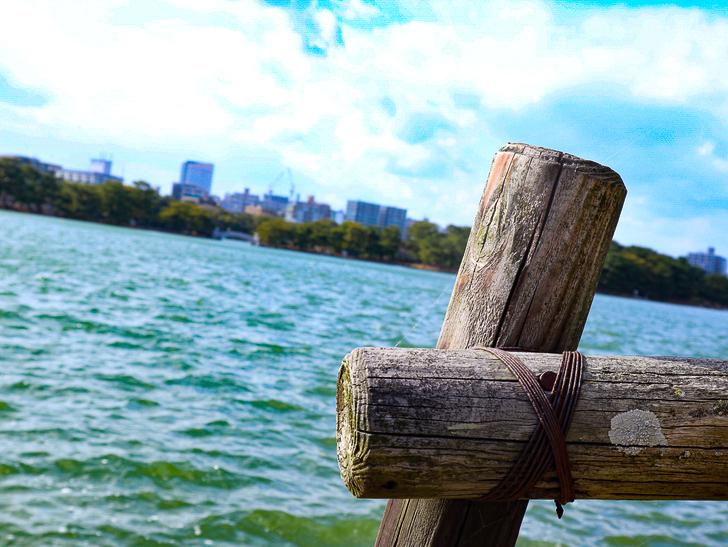 大きな池越しの都会「大濠公園」をまったり散歩:木製の支えとビル群