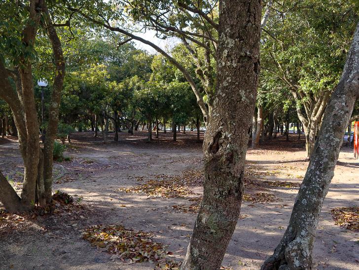 大きな池越しの都会「大濠公園」をまったり散歩:林:木漏れ日が美しい