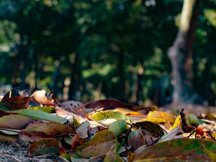 大きな池越しの都会「大濠公園」をまったり散歩:落ち葉