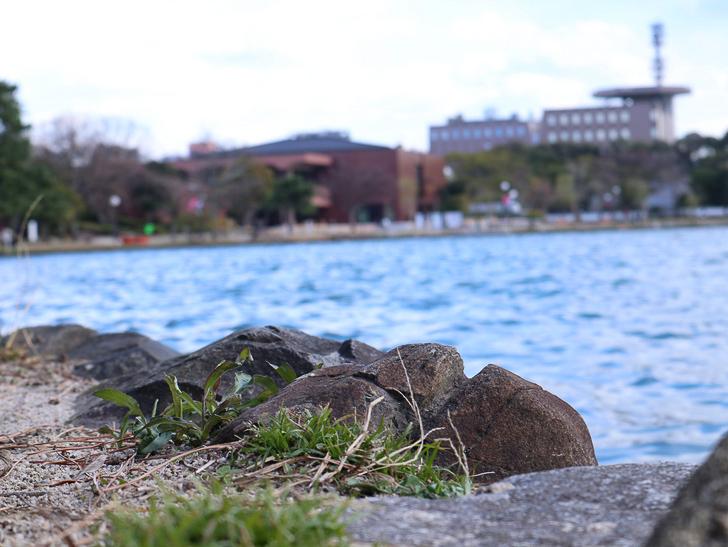 大きな池越しの都会「大濠公園」をまったり散歩:地面、池、ビル