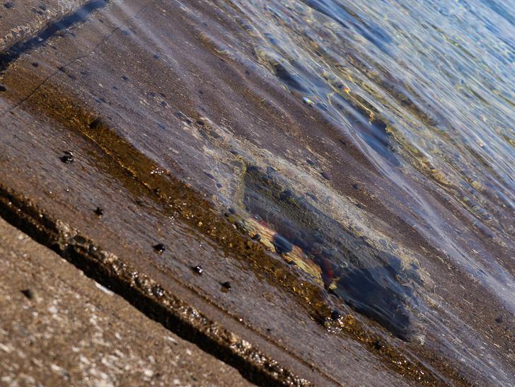 「西鉄新宮駅~相島渡船新宮待合所」までの徒歩ルートが絶景だった:水がキレイ