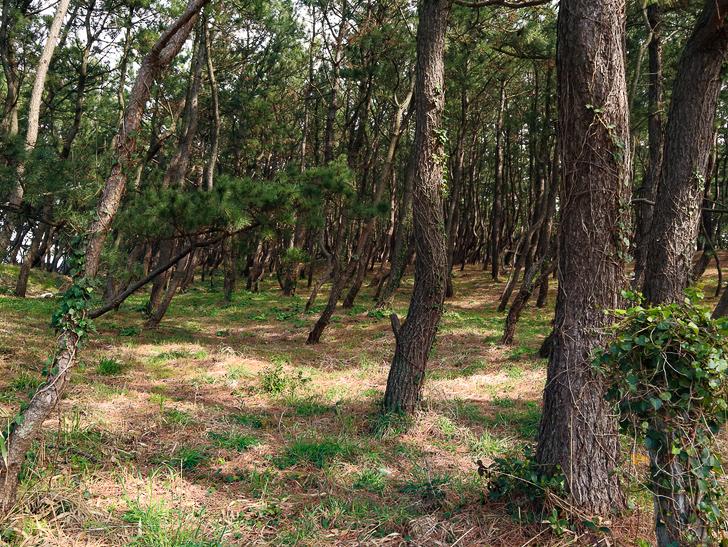 「西鉄新宮駅~相島渡船新宮待合所」までの徒歩ルートが絶景だった:木々が生い茂っている