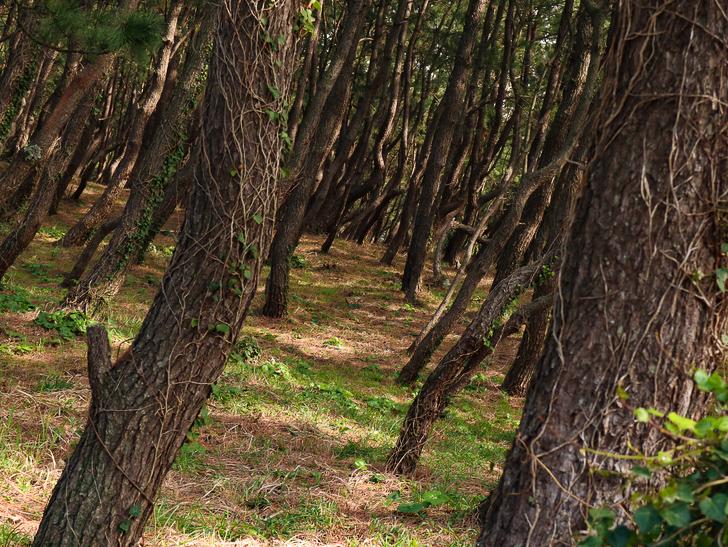 「西鉄新宮駅~相島渡船新宮待合所」までの徒歩ルートが絶景だった:「森の中」に居るよう